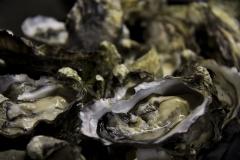 Tassie-Oysters