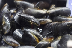 Black-Lip-Mussels